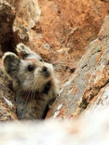 Magic Rabbit Spotted For The First Time In 20 Years In China
