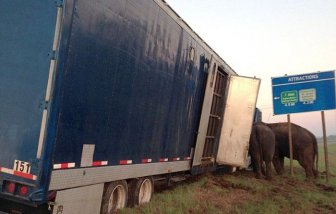 Circus Elephants Save 18 Wheeler From Tipping Over