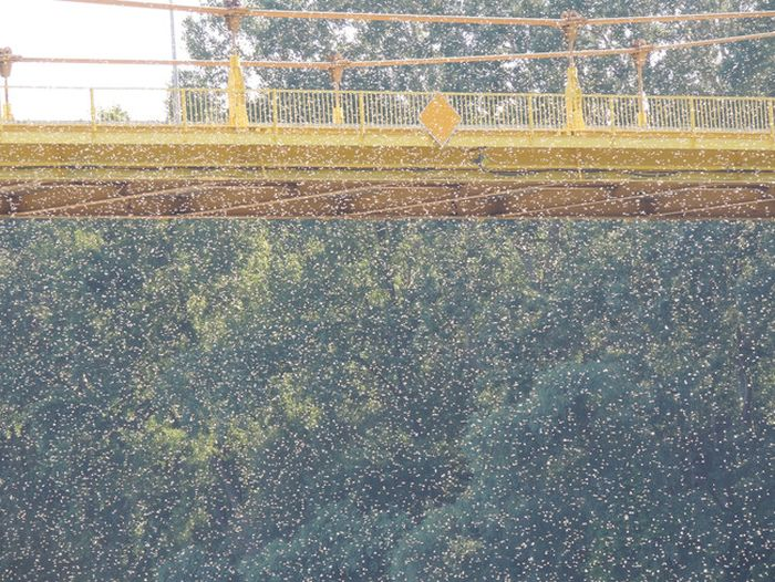 Every Year These Towns Get Flooded By A Swarm Of Insects
