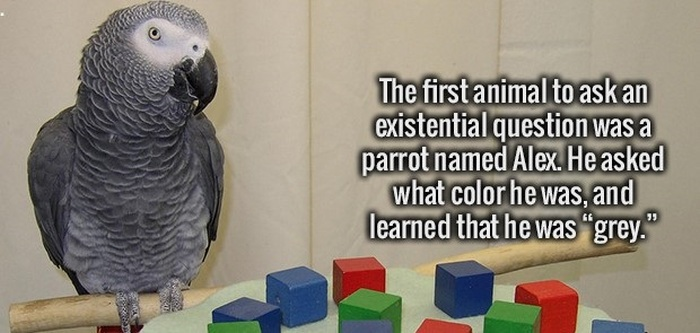 Get Your Daily Dose Of Education With These Fun Facts