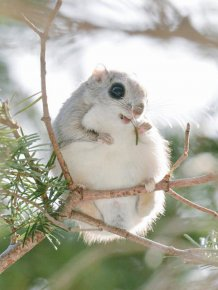 Incredibly Cute Animals