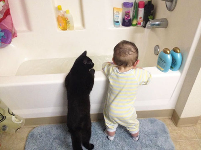 Adorable Photos That Prove Every House Needs A Cat