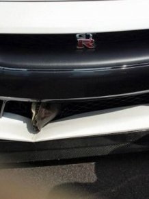 Turtle Survives After Getting Stuck In The Grill Of A Car