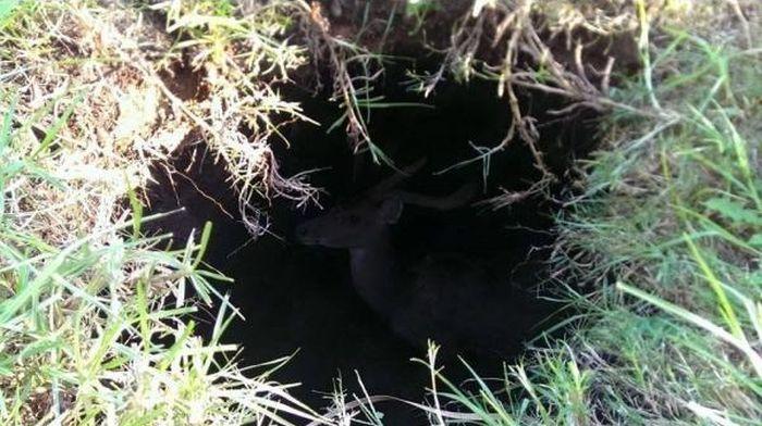 Strange Hole