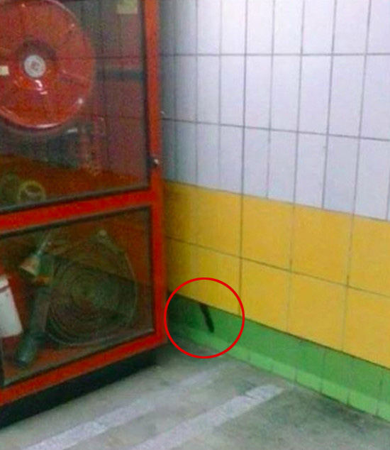 Cat Gets Stuck Behind A Subway Wall For Five Whole Years