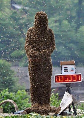 Bee Bearding