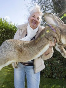 Meet Darius The World's Biggest Bunny