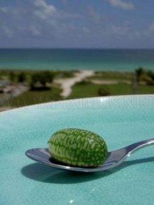 Tiny Watermelon
