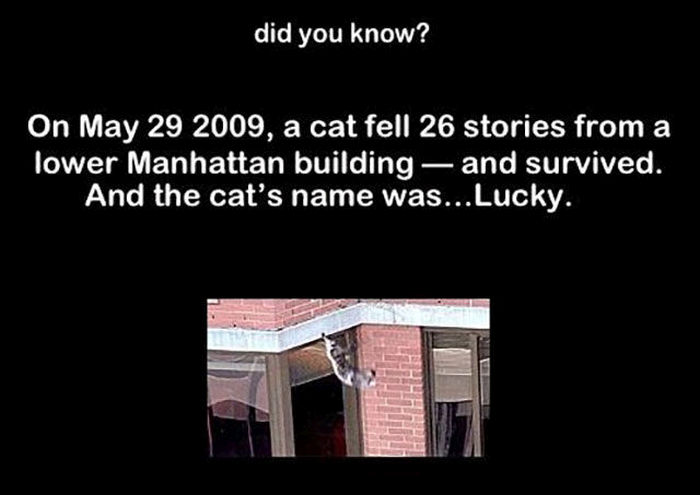 Random And Interesting Facts To Amuse Your Brain