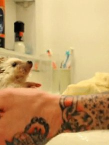 The 15 Best Hedgehog GIFs This World Has To Offer
