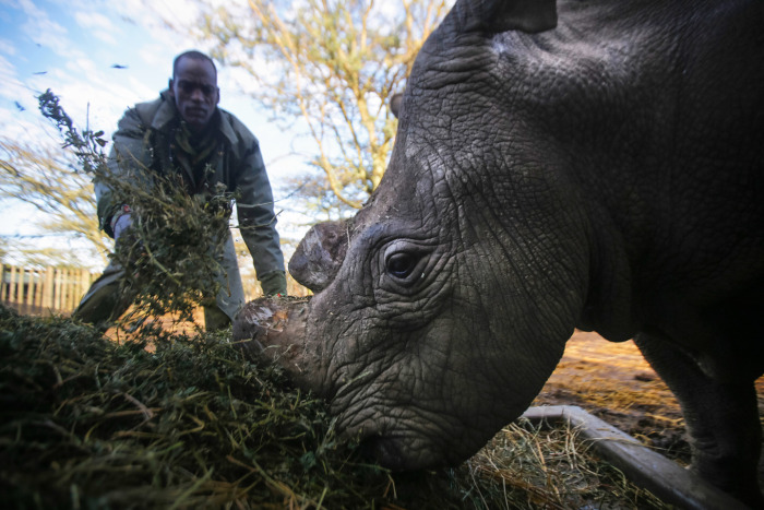 3 Of The Last White Rhinos In The World Are Under Protection