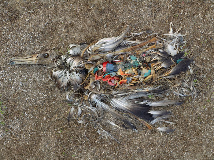 Heartbreaking Photos That Show The Damage Pollution Has Done
