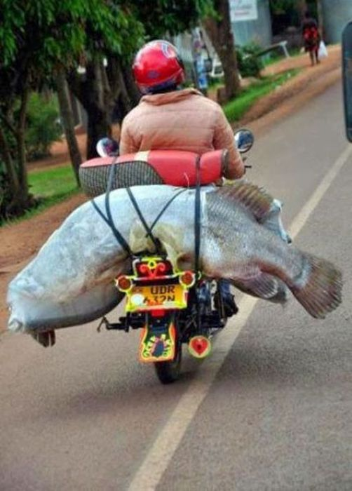 Bizarre Sights You're Only Going To See In Asia