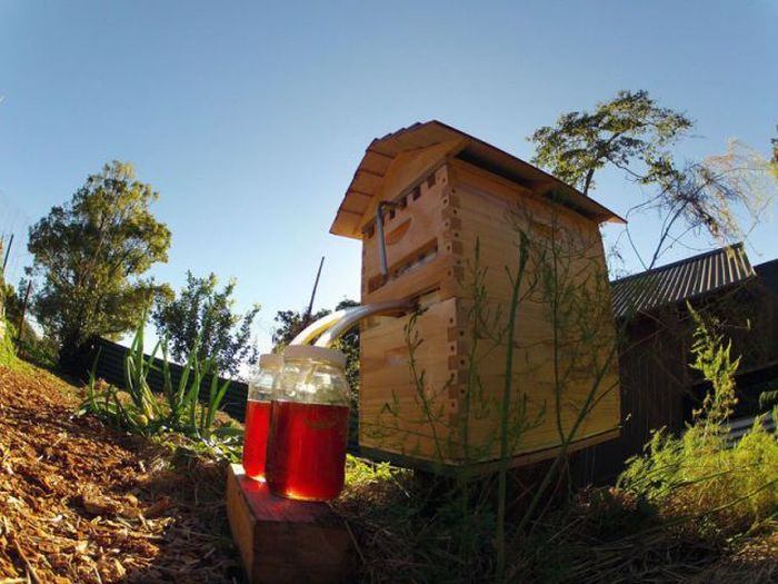 If You Want Honey On Tap This Is The Beehive For You