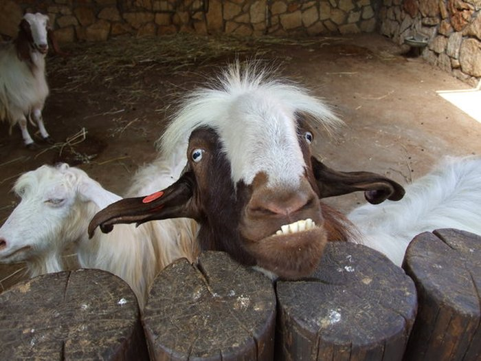 These Animals Have No Idea How Funny They Are