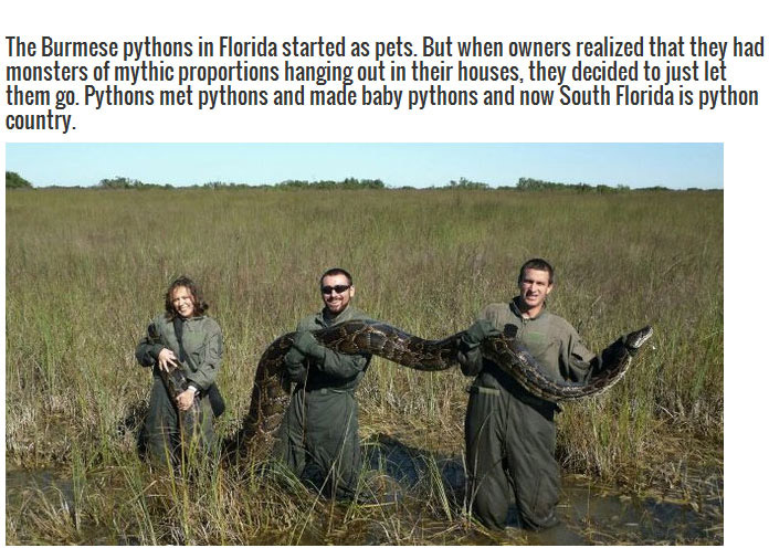This Is A Good Reason To Stay Out Of Florida