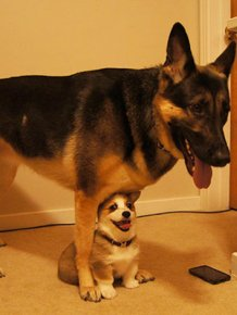 Dog Best Friends That Always Have To Be Together