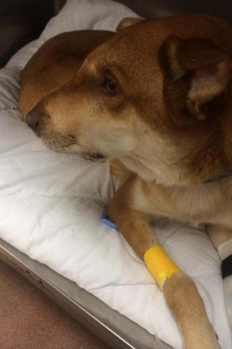 Dog Saves His Owner From A Deadly Rattlesnake