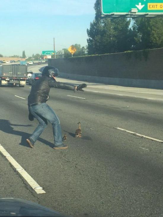 Biker Stops To Walk Ducks Across The Highway
