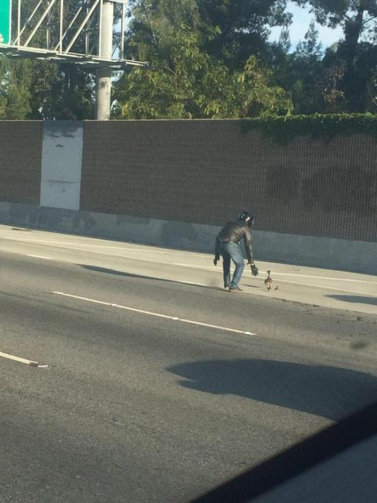 Biker Stops To Walk Ducks Across The Highway