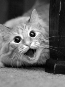 When Animals Get Caught By Surprise