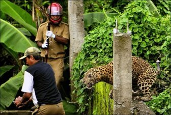Leopard Goes Nuts and Attacks People
