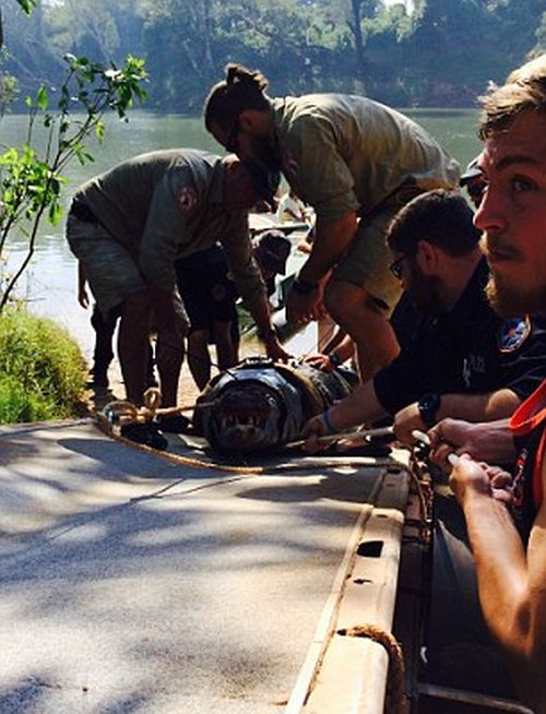 It Took Six Men To Capture This Monster Crocodile