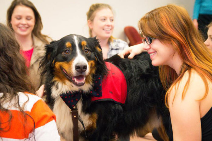University Creates A Special Puppy Room To Help Students With Stress