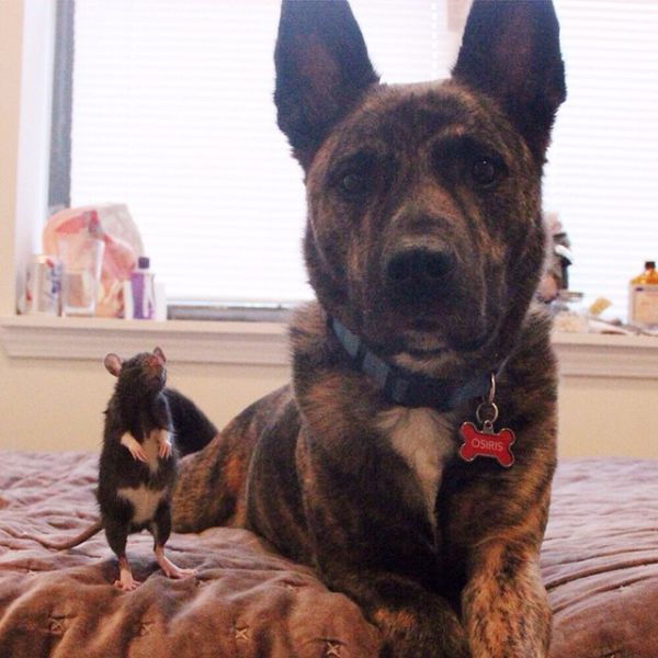 Meet The Dog That's Best Friends With A Rat