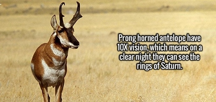 Here's Another Dose Of Fun And Interesting Facts