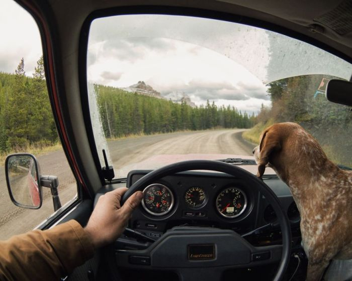 This Lucky Rescue Dog Gets To Go On Amazing Adventures
