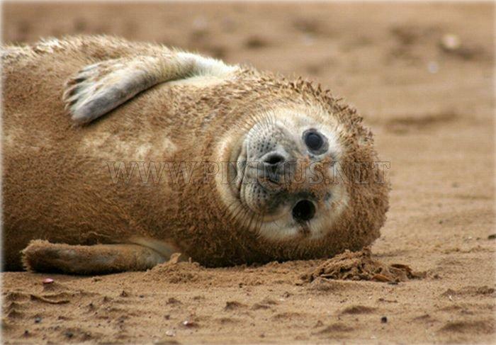 Cute baby seals