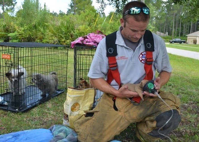 Firefighters Use Tiny Oxygen Masks To Save Puppies