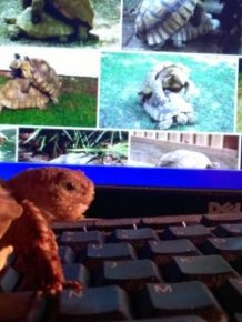 Girlfriend's Pet Tortoise Parties Hard While She's Away