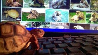 Girlfriend's Pet Tortoise Parties Hard While She's Away