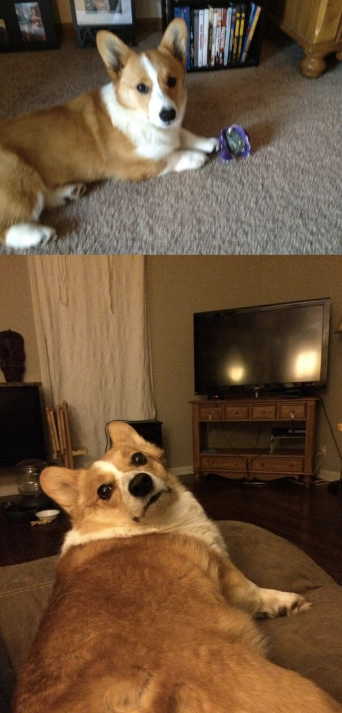 First And Last Pictures Of People's Pets That Will Hit You Right In The Feels
