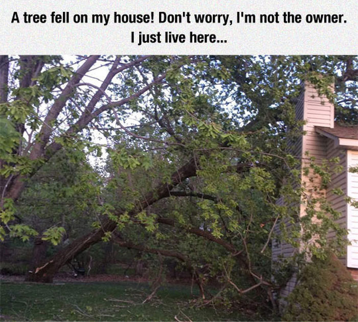 When A Tree Came Crashing Through The House They Found A Solution