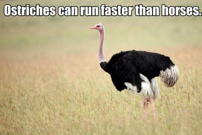 These Facts Will Help You Impress Everyone You Know