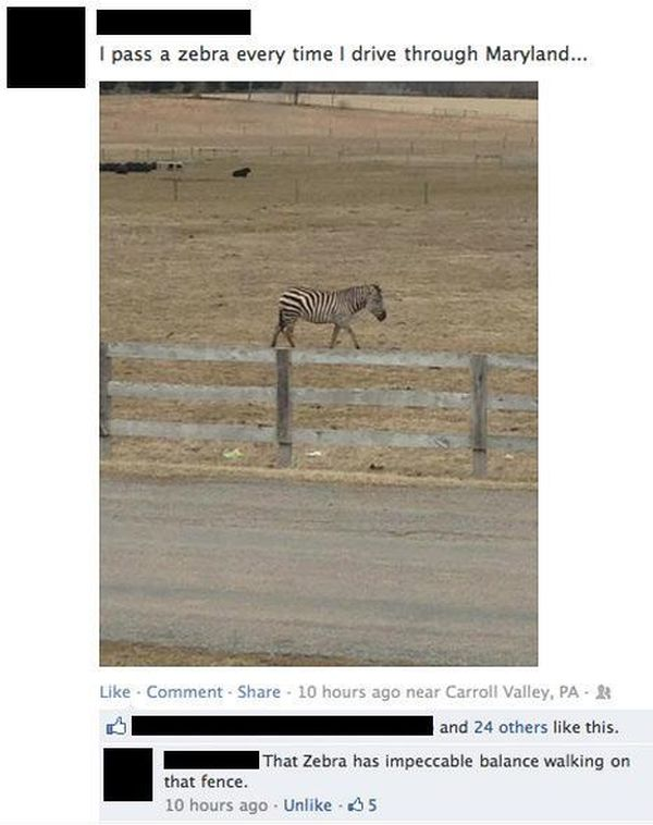 Funny Facebook Photo Comments That Will Make You LOL