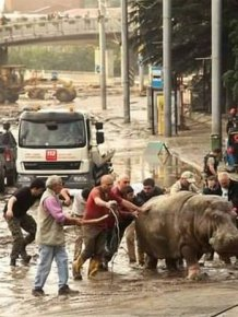Animals Escape Tbilisi Zoo After The Flood