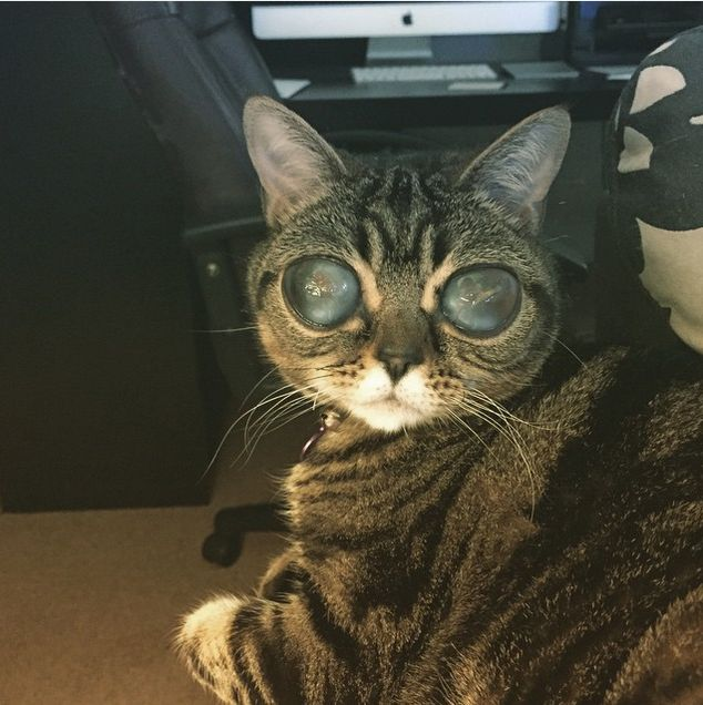 Is This Cat Actually An Alien?