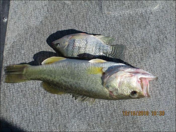 Unusual Catch