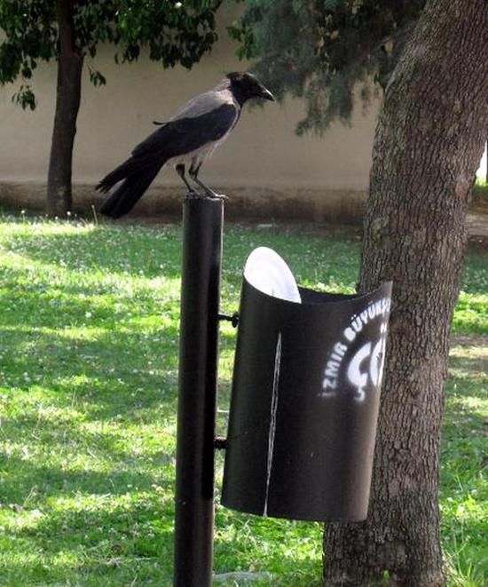 If More People Were Like This Crow The World Would Be A Cleaner Place