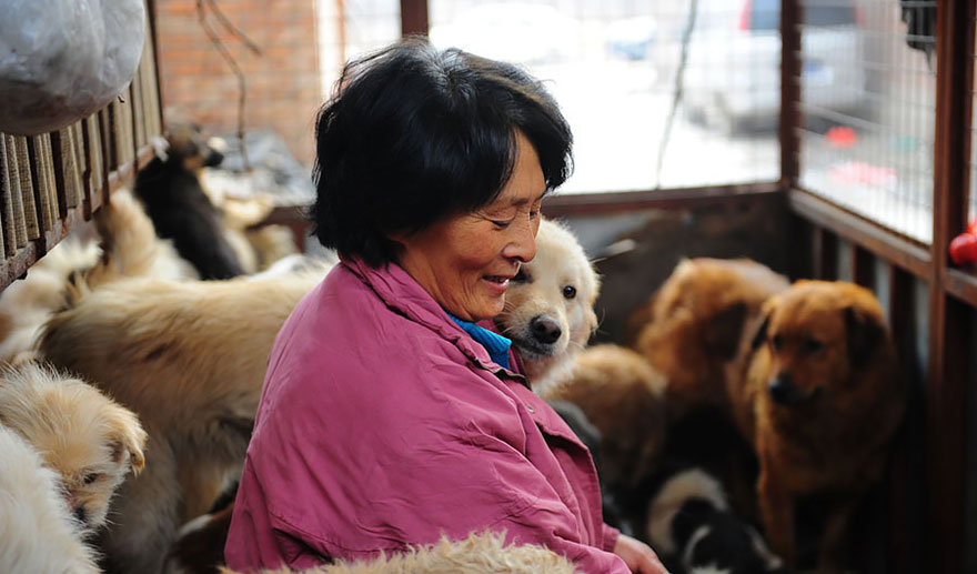 Chinese woman pays $1100 to save 100 dogs from chinese Dog-eating festival