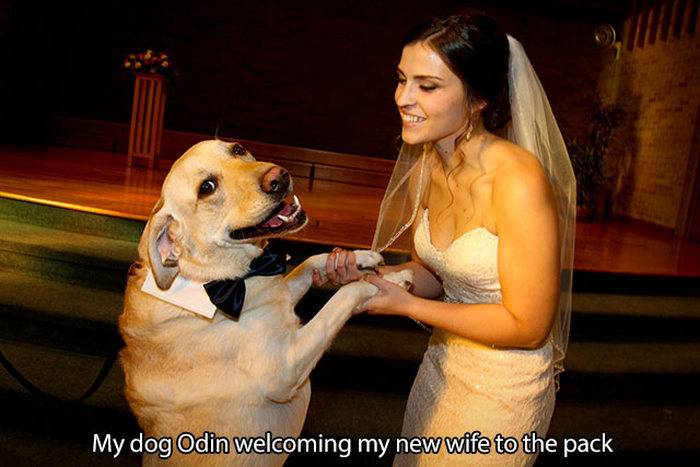 Pictures That Only Dog Lovers Will Truly Appreciate