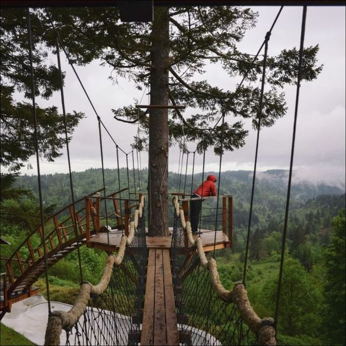 Designer Makes His Dream Come True By Building The Ultimate Tree House