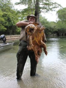 You Have To See This Gigantic 125 Pound Alligator Snapping Turtle