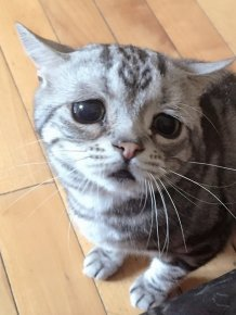The Saddest Cat On The Internet