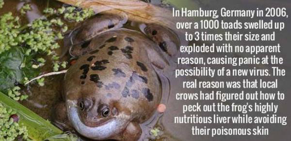 Terrifying Facts About Animals That Will Make You Fear Wildlife