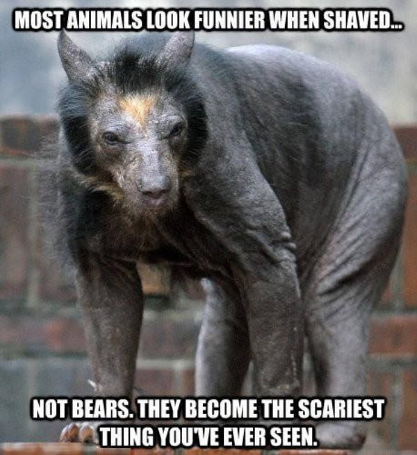 Terrifying Facts About Animals That Will Make You Fear Wildlife Others